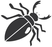 black drawing of a beetle on a white background