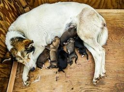 puppies feed on mother\'s milk