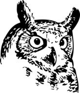 drawing of an owl head on a white background