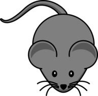 Mouse Gray Cute Animal