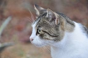 profile portrait of a spotted cat