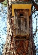new birdhouse on a tree trunk