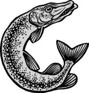 clipart of grey pike fish