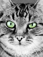 cat\' face portrait