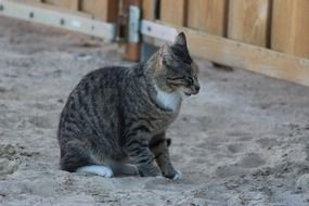 domestic cat sitting on sand