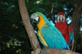 blue and red parrot on a tree branch