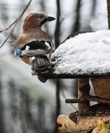 hungry bird in winter