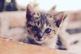 adorable young cat