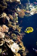 yellow lonely fish in the underwater world
