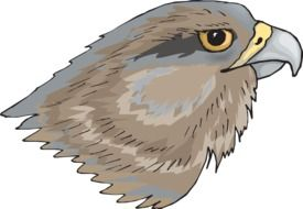 drawing of attractive Eagle bird head