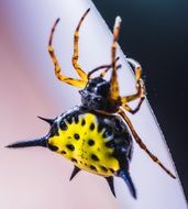exotic yellow brown spider