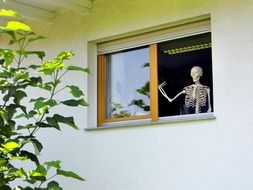 skeleton in an open window