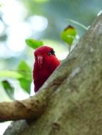 Parrot Red Bird Bill Lori