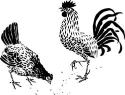 Rooster and Hen, black and white drawing
