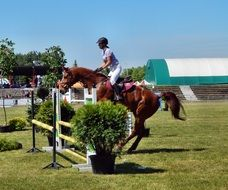training rider on horse jumps over obstacle