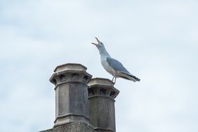 seagull on the top of the column