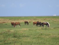 landscape of the Horses on a meadow