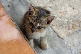 sweet baby cat outdoor
