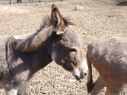 donkeys in the petting zoo in Germany