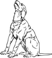drawing of A Dog Howling