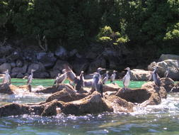 sea birds in New Zealand