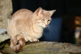 domestic cat sitting on the old tree trunk