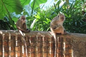 monkeys on a stone wall in thailand