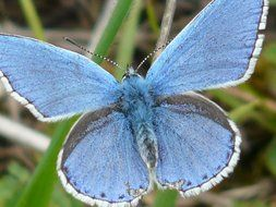 blue butterfly on the stem of a plant