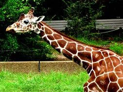 Picture of Giraffe with long neck