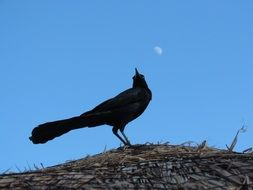 bird on the roof under the moon