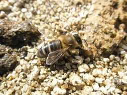 bee on the sand