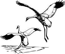 drawing of a pair of cranes