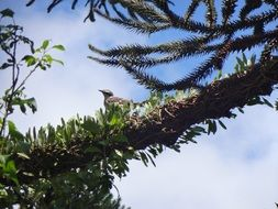 a bird on a branch of a coniferous tree