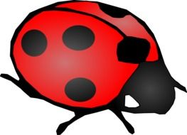 Ladybug, Red and Black Beetle, drawing