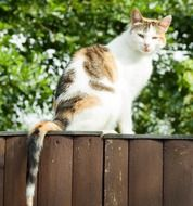 cat sitting on a wooden fence