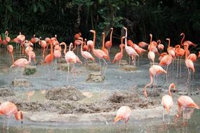 picture of the Flamingos on a pond