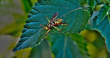 Leaf Wasp Insect Hymenoptera