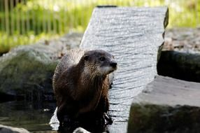 an otter on a board in an aviary