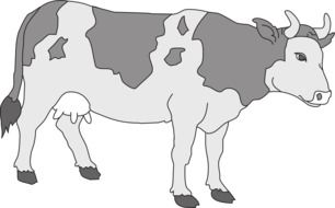 grey pattern of cow