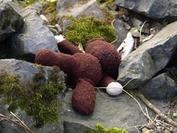lost stuffed bear