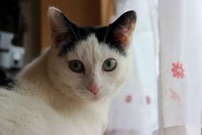 Cat Black White Eyes