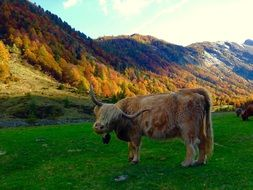 cow on a green pasture near the mountain