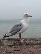 white seagull on a gray cloudy day
