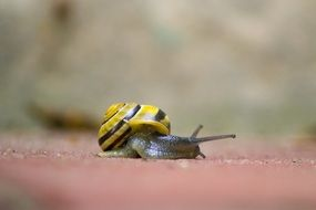 crawling yellow snail