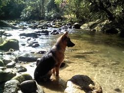 thoroughbred dog near the water
