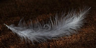 fluffy feather on the ground