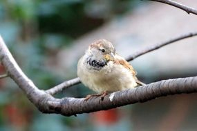 sparrow on a tree branch in the garden