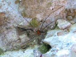 spider with long legs on a stone