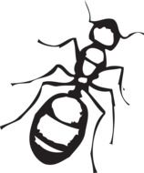 Ant, Top View, black and white illustration