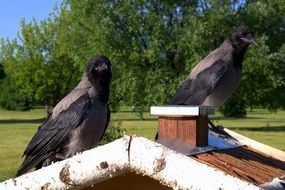 two crows sitting on a wooden house